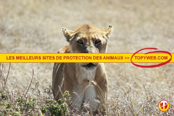Site de rencontre gratuit pour passionné d'animaux